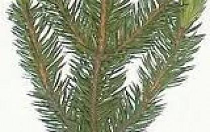 Skogplanter 2012
