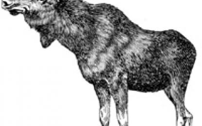 Landsdelsmesterskap i elgbaneskyting
